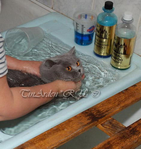 Как и чем помыть кошку в домашних условиях 541
